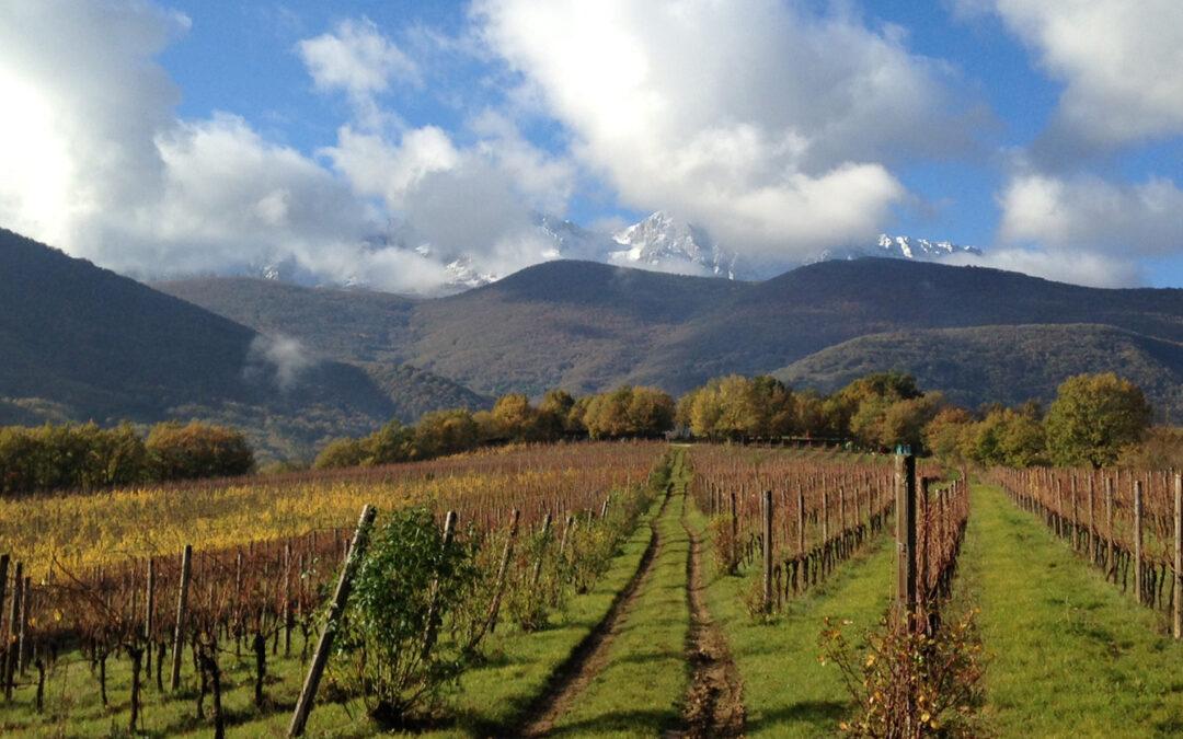 Vigna di More: il vino eroico di Adriana Tronca